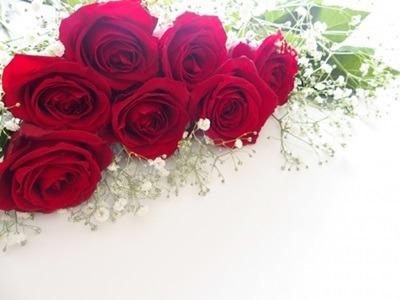 父の日定番の花はバラ 花の由来と理由とは・・・