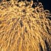 蒲郡花火大会2016の日にちや時間、打上数や駐車場、混雑情報まとめ