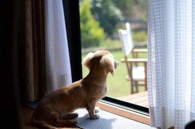 犬の夏バテや熱中症、症状や効果的な対策方法、食事はこれ!