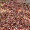 焼き芋を野外で!落ち葉で焚火をして作るときの時間や注意点