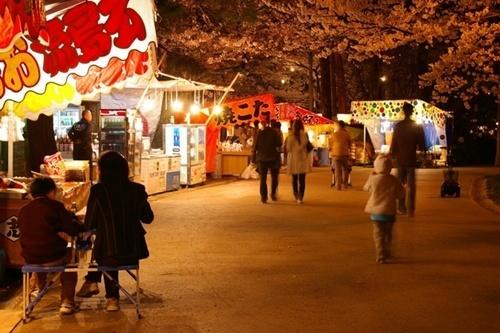 高田城公園の桜2016見頃の時期やライトアップ時間、駐車場や混雑情報!