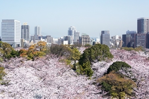 舞鶴公園桜まつり2016見頃の時期やライトアップ時間、駐車場や混雑情報!