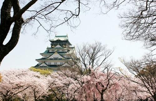 大阪城公園の桜、見頃の時期やライトアップ時間、駐車場や混雑情報!