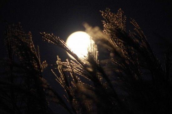 十六夜と十三夜と十日夜の違い、お月見の方法は変わる?