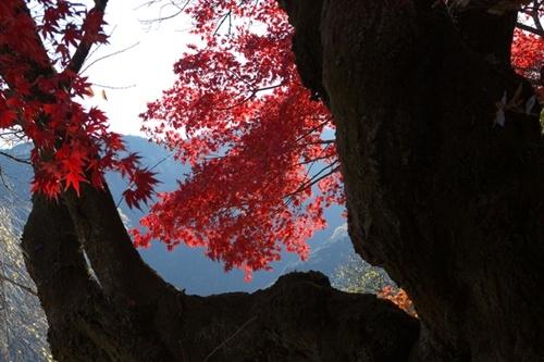 秋川渓谷の紅葉の見頃や近くの駐車場、宿泊場所やみどころ情報!