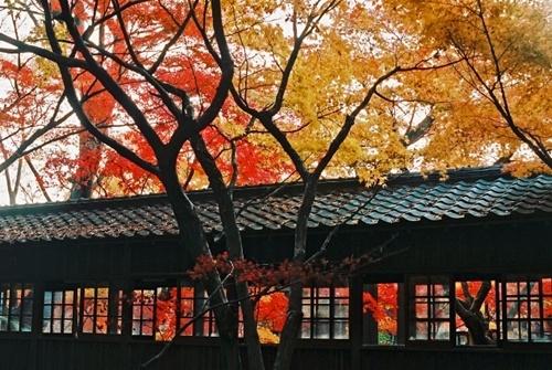本土寺の紅葉2016見頃の時期や会場、周辺の駐車場や宿泊場所情報