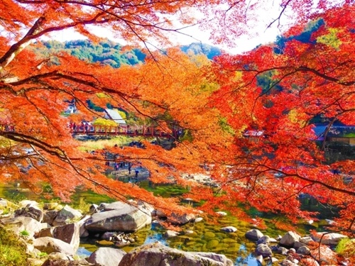 香嵐渓紅葉の見頃の時期や詳細場所、宿泊場所や駐車場情報!