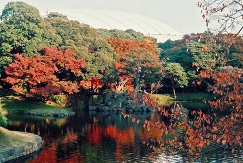 小石川後楽園の紅葉2016見頃の時期や場所、付近の駐車場や宿泊場所情報