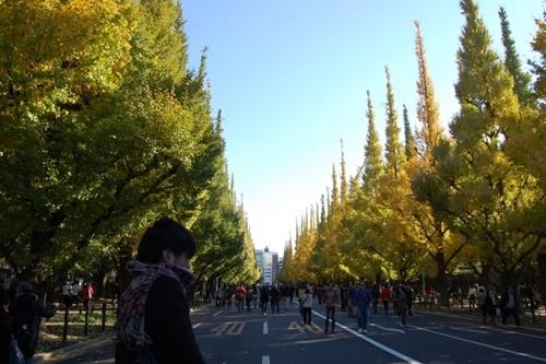 明治神宮外苑の紅葉2016イチョウの見頃時期や場所、駐車場や宿泊場所情報