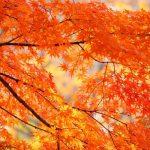国営武蔵丘陵森林公園の紅葉、見頃の時期やライトアップ時間、宿泊場所情報!