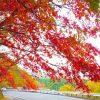 日塩もみじライン紅葉の見頃時期や場所、周辺の駐車場や宿泊場所情報