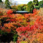 東福寺の紅葉、見頃の時期や詳細場所、周辺の駐車場や宿泊場所情報