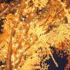 新潟市光のページェント2016期間や点灯時間、アクセス方法や見どころ!