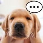 犬の寒さ対策、外飼いしている場合と室内の場合、外でも中でも効く方法これ!