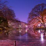 夜桜を見に行く時の飲み物や食べ物、準備しておいたほうが良い物はこれ!